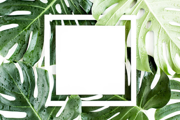 Wall Mural - Texture tropical palm leaf Monstera with dew drops and white frame for text on white background. Flat lay, top view