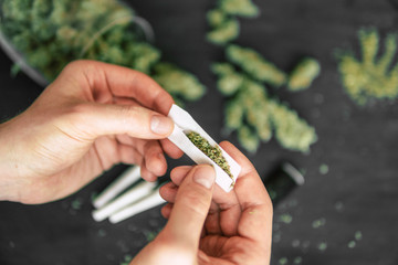 Rolled joint cannabis weed in hand of man Cones bud of marijuana flowers cannabis
