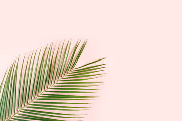 Wall Mural - Tropical palm leaf on pink background. Flat lay, top view minimal concept.