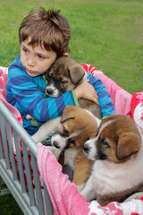 Kleiner Junge sitzt mit Hundewelpen im Bollerwagen