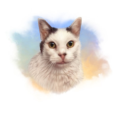Cute white and black cat. Watercolor portrait of kitty. Drawing of a cat with yellow eyes executed in watercolor. Good for print T-shirt. Hand painted illustration. Art background, banner for pet shop