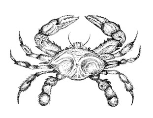 Crab, Illustration, Crab Drawing, Hand Drawn Art, Crabby, Maryland, Stipple Pen and Ink, Sketch, Claws