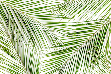 Wall Mural - Tropical green palm leaves on white background. Flat lay, top view