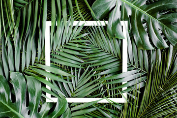 Texture tropical palm leaf with white frame for text. Flat lay, top view