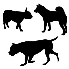 Vector dog illustrations. Set of black silhouettes. Different breeds of dogs -05