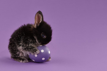 Easter bunny rabbit with egg on purple background