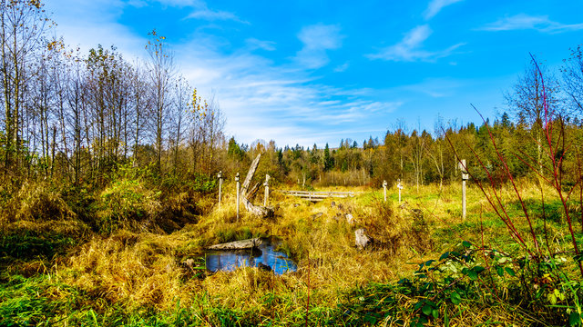 The Silverdale Creek Wetlands, a freshwater Marsh and Bog near Mission, British Columbia, Canada on a nice autumn day