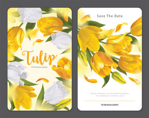 Blooming beautiful yellow with white tulip flowers background template. Vector set of blooming floral for wedding invitations, greeting card, voucher, brochures and banners design.