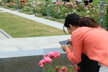 スマホで薔薇の写真を撮る女性(大阪・中之島公園)