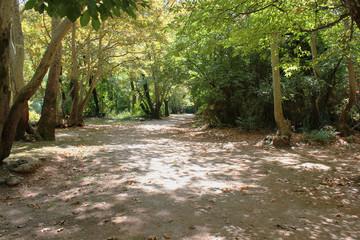 Agios Nikolaos Park Naousa Greece Europe