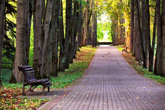 Autumn landscape - beautiful autumn pathway in park. Old high linden trees and benches on the park alley. Sunny autumn day.