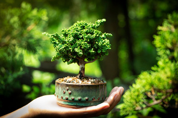 Tuinposter Bonsai Sekka Hinoki bonsai in Hand