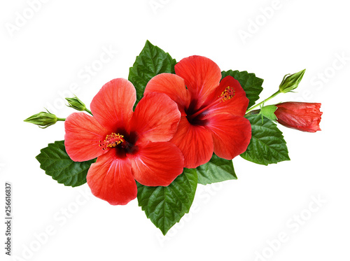 Red Hibiscus Flowers In A Tropical Arrangement Stock Photo And