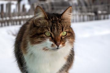 Cat on the street. Winter snow. Sunny day.