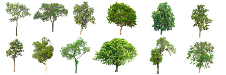 Collection of tree on white background.