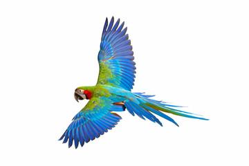 Fond de hotte en verre imprimé Perroquets Colorful flying parrot isolated on white background.