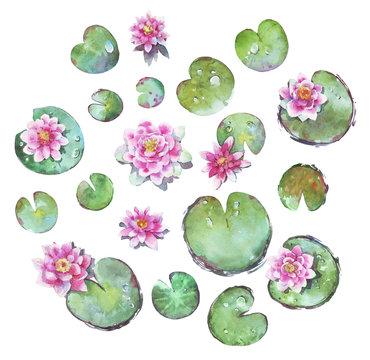 set of waterlilies watercolor illustration