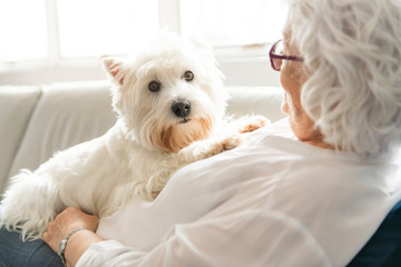 The Therapy pet on couch next to elderly person in retirement rest home for seniors Fotomurales