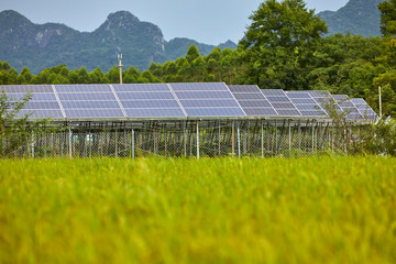 Beautiful picture of green rice fields and solar photovoltaic panels in the distance