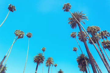 Palms of Beverly Drive