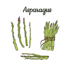 Illustration pods and asparagus bundle isolated on white background. Vector