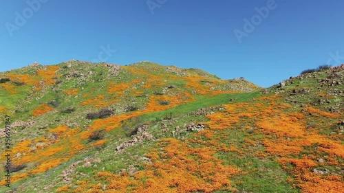 California Super Bloom 2019 Aerial Shot of Poppy Flowers in