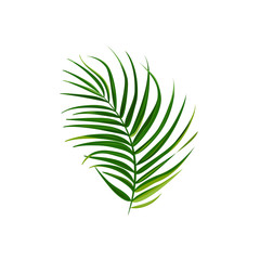 Single isolated palm leaf. Bright vector illustration.