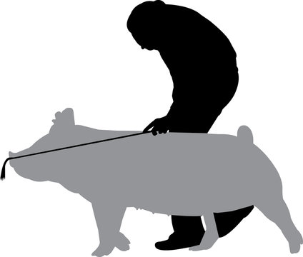 Pig Show Silhouette Shape Vector