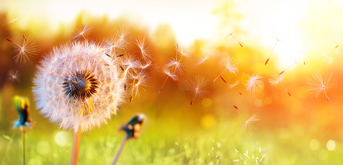 Wall Mural - Dandelion In Field At Sunset - Freedom to Wish