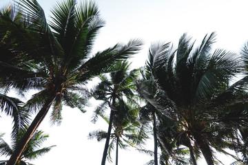 Vintage toned palm tree over sky background summer