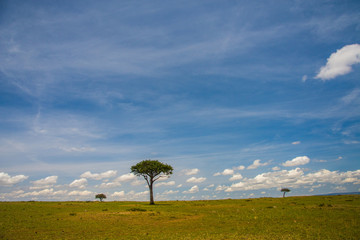 Masai Mara Game Reserve Wall mural