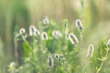Juicy grass and gentle flowers in the field on a sunset backlight