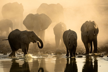 Elephant herd at a water hole