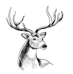 Ink black and white drawing of a stag deer