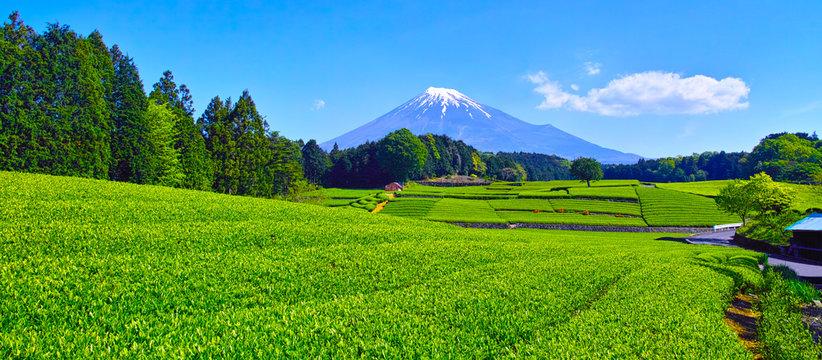 静岡県富士市からの茶畑と富士山