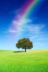 Wall Mural - Idyllic view, lonely tree with rainbow on green field