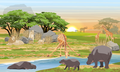 Lions, giraffes, hippos and elephants in the African savannah. Predators and herbivores at a watering place. Wildlife of Africa. Realistic Vector Landscape