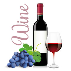 Bottle and glass of red wine with bunch grapes. Vector illustration