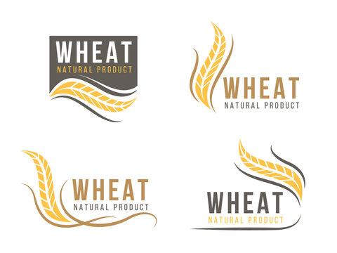 Abstract Wheat rice logo sign vector design