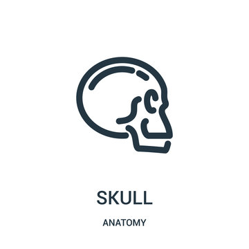 skull icon vector from anatomy collection. Thin line skull outline icon vector illustration. Linear symbol for use on web and mobile apps, logo, print media.