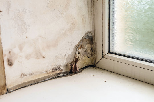 Wetting and growth of molds of window slope near plastic window and windowsill. Collapsing drywall.