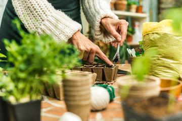 Planting herbs in organic pots