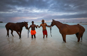 Stable boys from the Garrison Savannah racecourse pose for a photograph as they wash their horses in the sea at Pebbles Beach near Bridgetown