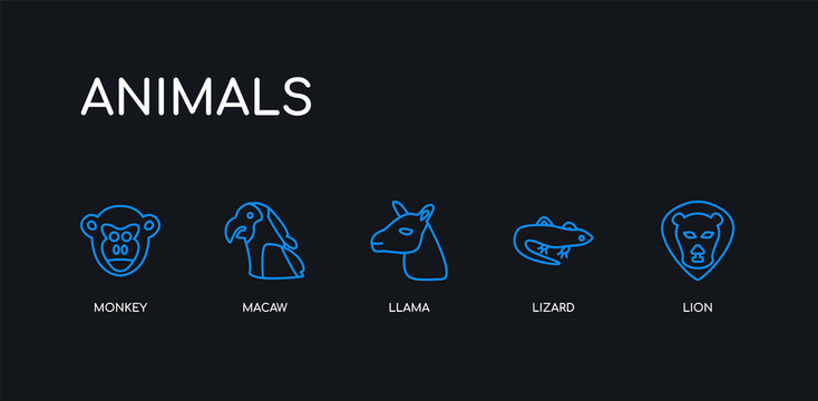 5 outline stroke blue lion, lizard, llama, macaw, monkey icons from animals collection on black background. line editable linear thin icons.