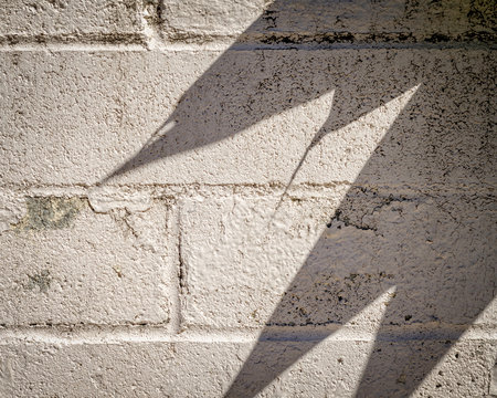 Close-up of cinder block wall with leaf shadows on surface.