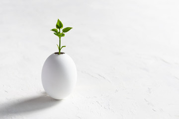 New Life Concept. Little sprout green tree growth in eggshell on white background. Easter. Copy space
