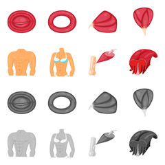 Isolated object of fiber and muscular icon. Set of fiber and body  vector icon for stock.