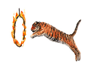 Circus tiger jumps through a ring of fire. Watercolor illustration on white