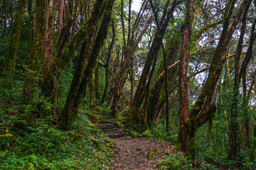 Hiking trail in green summer forest