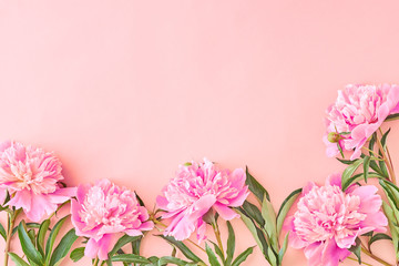 Flat lay border with pink peonies on a pink background